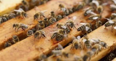 beehive-1143380_1280