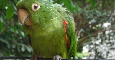 parrot-1546965-1279x958