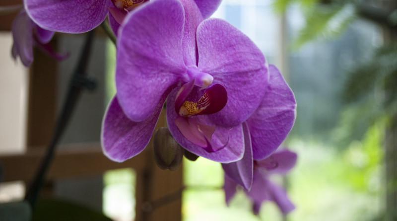 various-orchids-1332825-1279x850