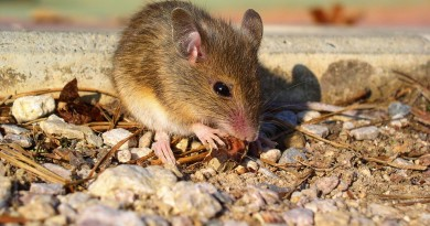 mouse-1645120_960_720