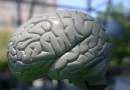 """Wiemy, dlaczego mózg może """"widzieć"""" rytm"""