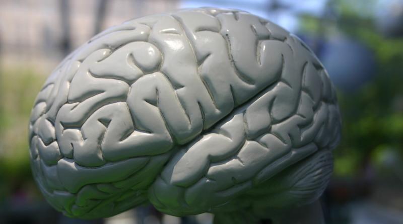 brains-1426619-1280x850