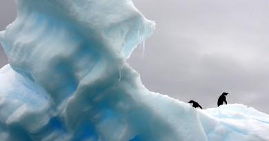 penguins-801876_1280