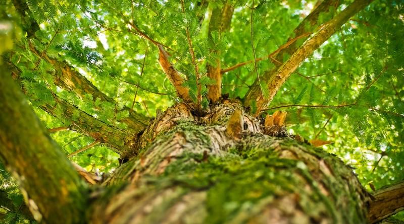 tree-1750784_1920