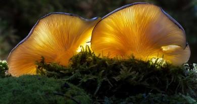 mushroom-3023460_960_720