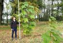 Inwestycja w drzewa Oxytree – zysk finansowy według zrównoważonego rozwoju