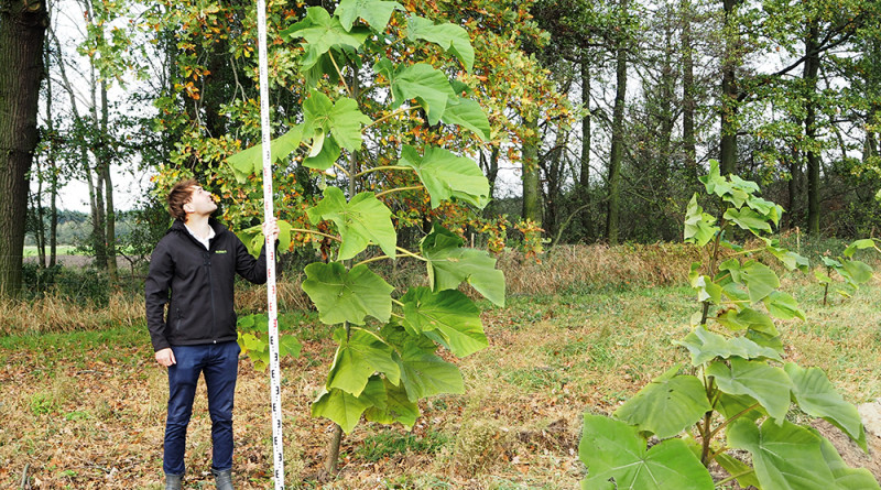 plantacja-3-letnich-oxytree-wielkopolska